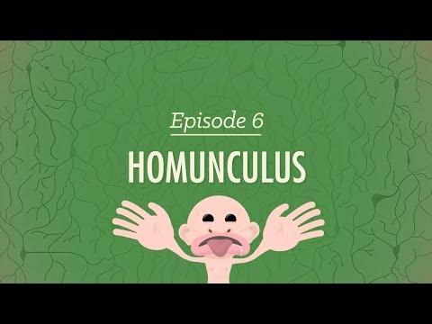 Homunculus - Crash Course Psychology #6