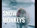 NAGANO // SNOW MONKEY PARK