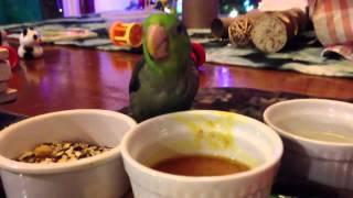 Bean Loves Butternut Soup! (parrotlet Eating Soup)