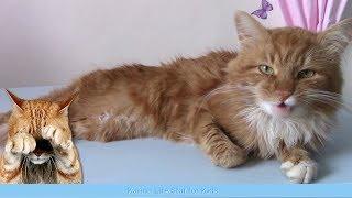 Коты и кошки Коты поют Видео для детей и котиков  😺😻😸 МЯУ!