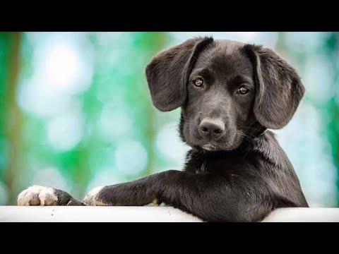 Los perros saben dónde terminan sus patas y dónde comienza el mundo