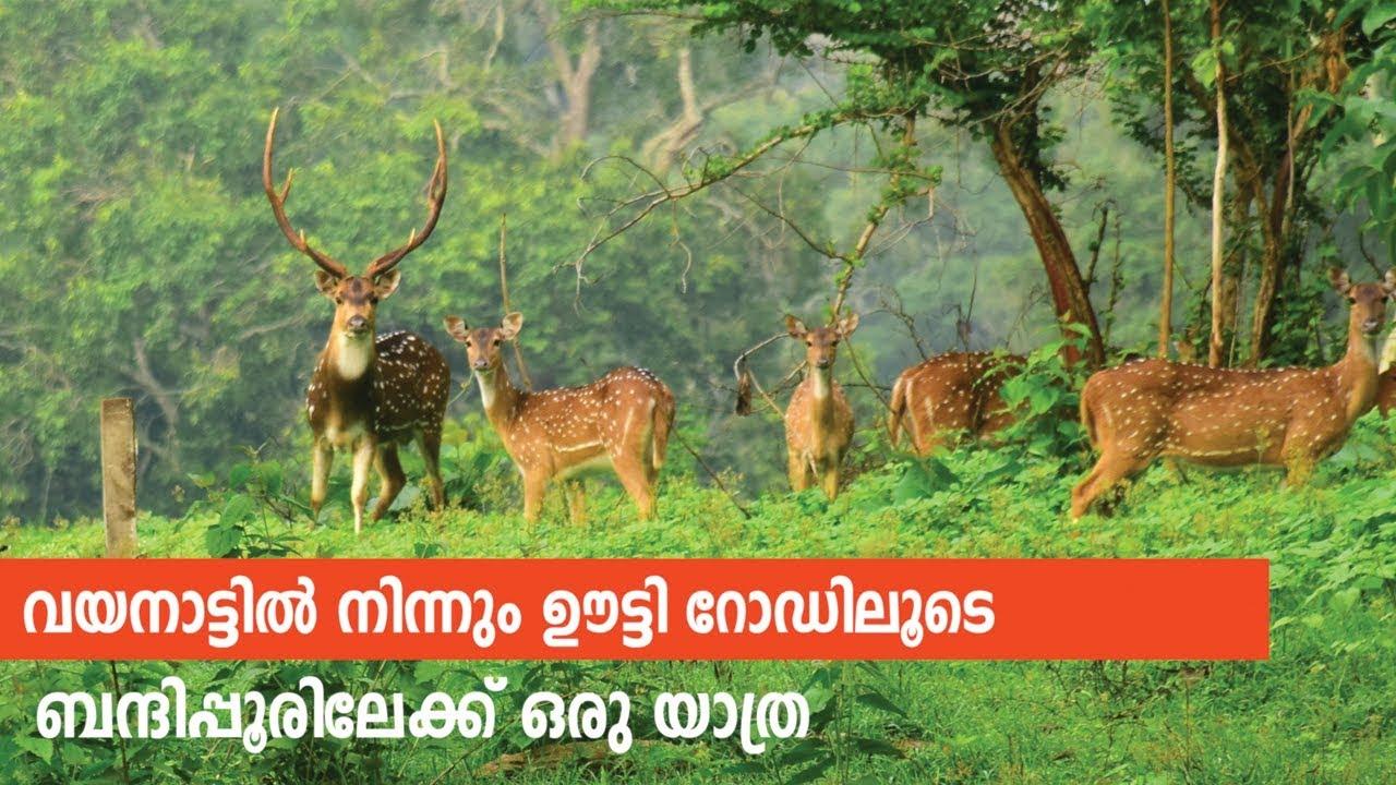 Download Scenic Trip to Bandipur from Wayanad - Malayalam Travel Vlog