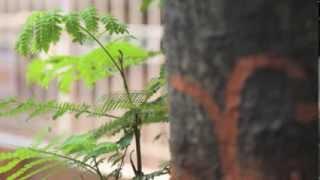 Nurturing plants | Instrumental | Track 2