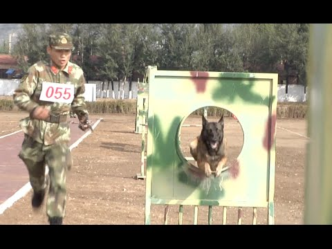 Police Dogs Put through Paces in North China's Inner Mongolia