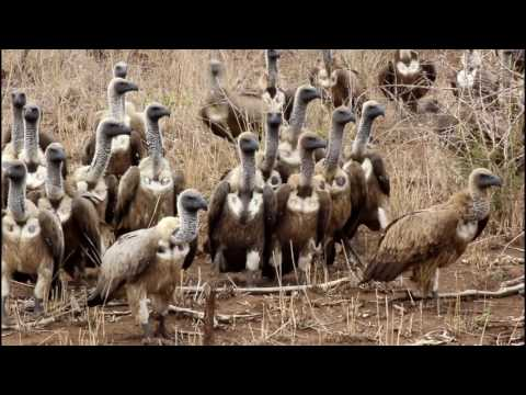 Kruger: Life in African Eden - A Wildlife Film by Ben Chapple