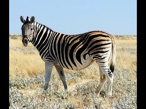 Best Places to Visit in Namibia.  Namibia Animals. Travel to Namibia.
