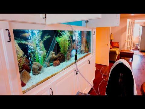 Aquarium Maintanence W/ Something Fishy Inc. Part 1