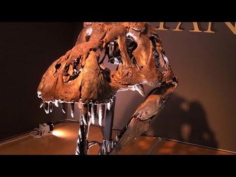Στο σφυρί ένας από τους μεγαλύτερους σκελετούς τυραννόσαυρου στον κόσμο  (pic - vid)