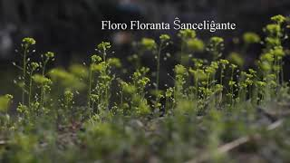 06 | Deklamado de Nuna – Floro Floranta Ŝanceliĝante | 흔들리며 피는 꽃 – 에스페란토