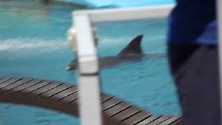 como pescar un delfin