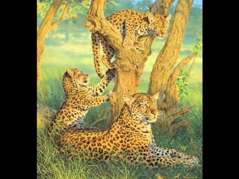 The Animal Song- Savage Garden