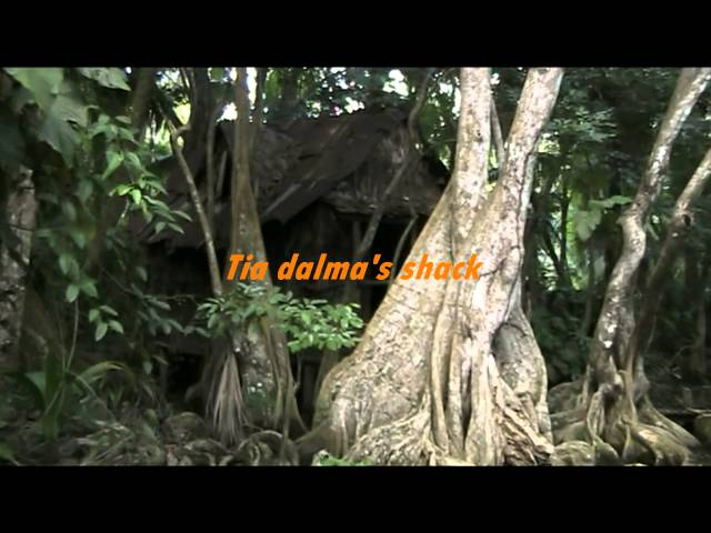 The Indian River- Dominica's best swamp