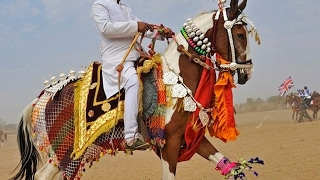 vuclip 🐎 Horse Dance Competition At Pushkar Cattle Fair In Rajasthan | Incredible India