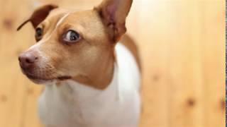 Топ-5 заблуждений при выборе собаки.