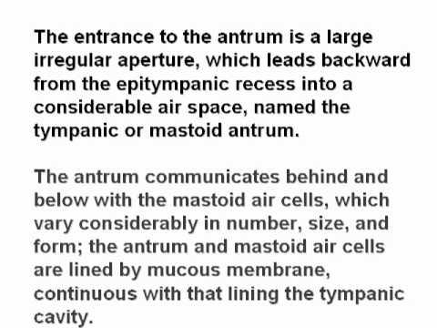 mastoid air cells and mastoid pneumatization.mp4