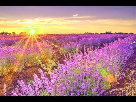 GOOD MORNING MUSIC 528Hz ➤ Positive Morning Thoughts - Positive Thinking - Morning Meditation Music