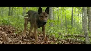 Очень добрый фильм про собаку Макс / Max