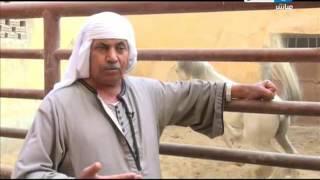 اخر النهار - عالم الخيول .. فسحة و متعة و تجارة رائجة