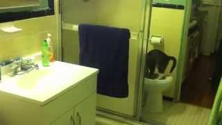 Как приучить кота к унитазу. Шаг 3.CitiKitty