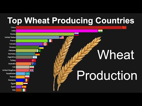 Top Wheat Producing Countries 1960 To 2019