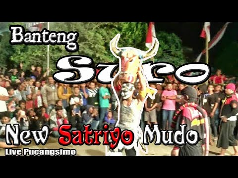 Makin Ganas !!! Banteng Suro New Satriyo Mudo Ngamuk !!!---Seru !!!  Live Pucangsimo