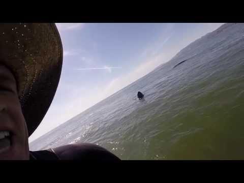 Video: man encounters gray whales off Ocean Beach