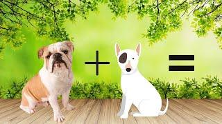 Top 10 Unreal English Bulldog Cross Breeds   Bulldog Mixes