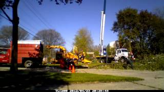Silver Maple Tree Removal Livonia, MI.mp4