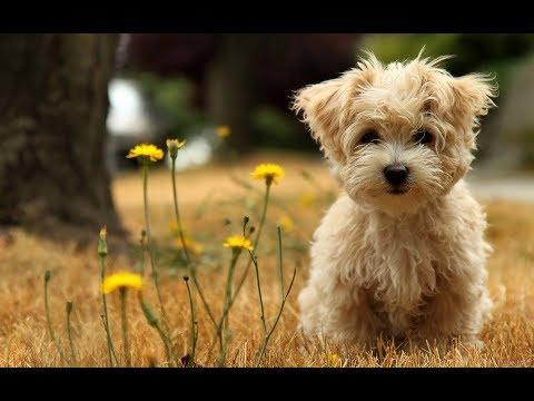 6 Cutest And Friendliest Hypoallergenic Dog Breeds....