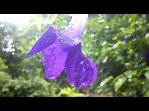 Sony Xperia Neo L camera sample video