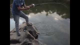 Video pescaria de caranha rio das almas download MP3, 3GP, MP4, WEBM, AVI, FLV Oktober 2018