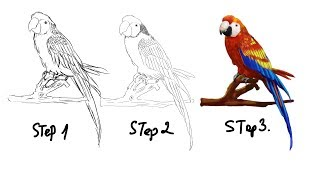 parrot draw realistic easy step sketch