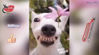 Смешные видео про собак