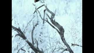 Blow Blow Thou Winter Wind - William Shakespeare / James Nathaniel Holland Mp3