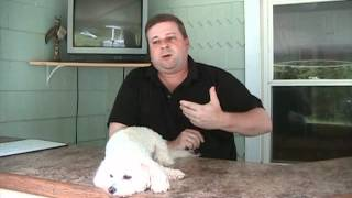 Dog Training Business - Biggest Marketing Mistakes