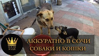 Собаки и кошки Сочи  Аккуратно а то зацелуют!  SOCHI-ЮДВ  ЖК Cочи   Квартиры в Cочи