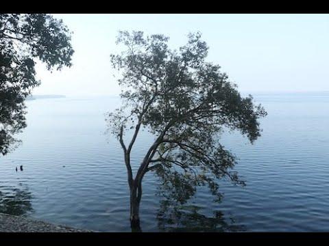 #Pilibhit Tiger reserve