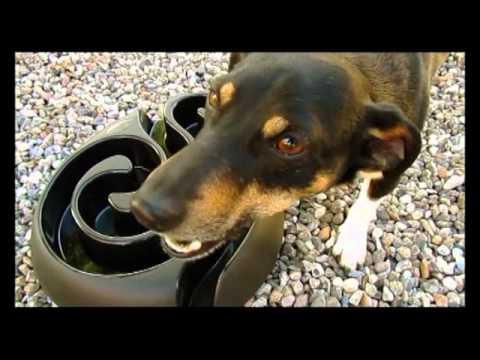DogMaze Futternapf - Futterlabyrinth