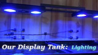 Video Lights on our 220 Gallon Display Aquarium download MP3, 3GP, MP4, WEBM, AVI, FLV Oktober 2018