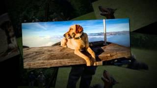 Dog Training Bergen County Nj