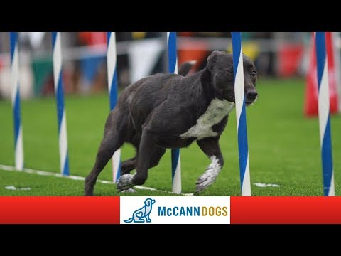 This Episode Is About Dog Agility Training