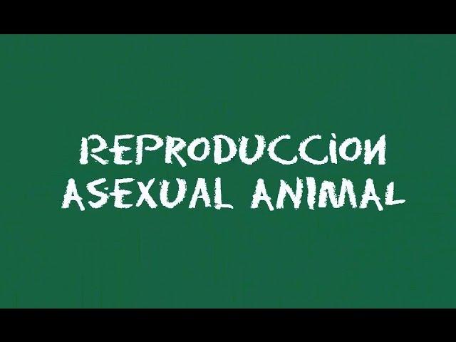 Reproduccion asexual explicacion de las 70