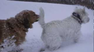Blizzard Dogs