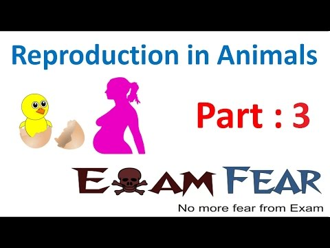 Biology Reproduction in Animals Part 3 (Binary & multiple fission) Class 8  VIII