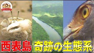 【世界自然遺産登録!!】西表島の干潟を覆いつくすカニ大群…豊かな海を守る水の番人【どうぶつ奇想天外/WAKUWAKU】