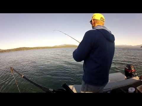 Almanor Fishing Adventures Brown Trout
