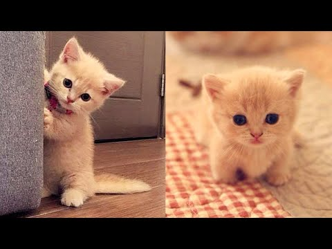 Baby Cats – Cute and Funny Cat Videos Compilation #26 | Aww Animals