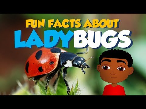 Intertidal Zone Animals Plants and Important Facts from YouTube · Duration:  6 minutes 3 seconds