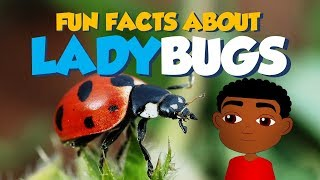 Amazing Facts about Bugs, Beetles & Insects for Kids (Fun Facts): Ladybugs (Educational Cartoon)