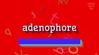 Скачать How To Say Adenophore High Quality Voices